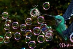 misterybubbles_00117
